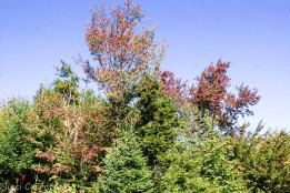 Fall colors at Mad River Glen ski area