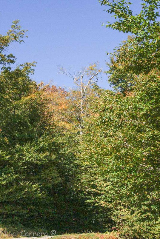 Fall colors at Mad River Glen ski area