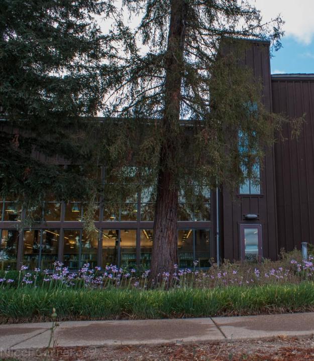 Saratoga library redwood grove
