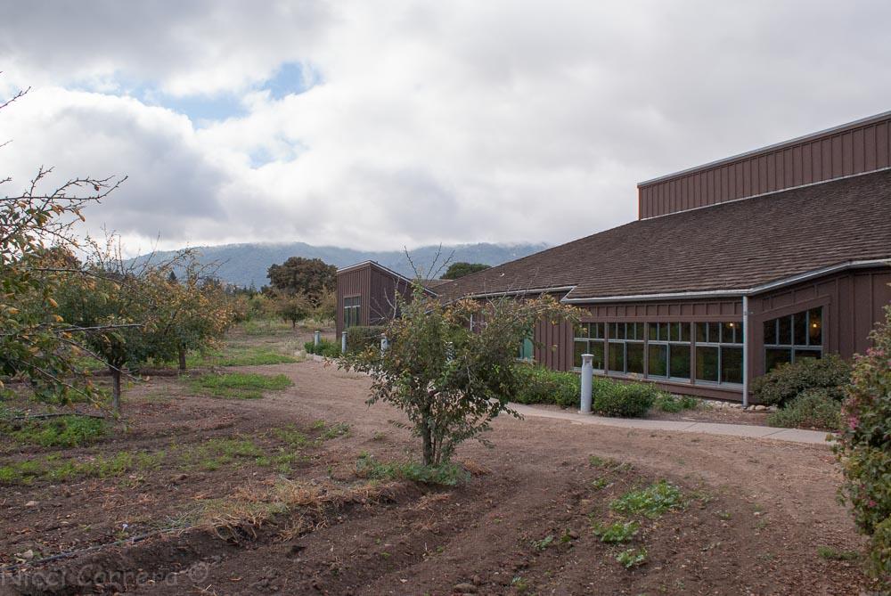 Saratoga library setting