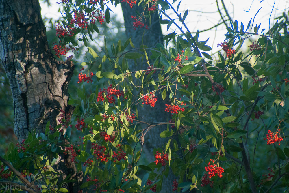 Red berry bush