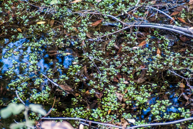 A bit of water in a creek in Rancho San Antonio Park, Cupertino