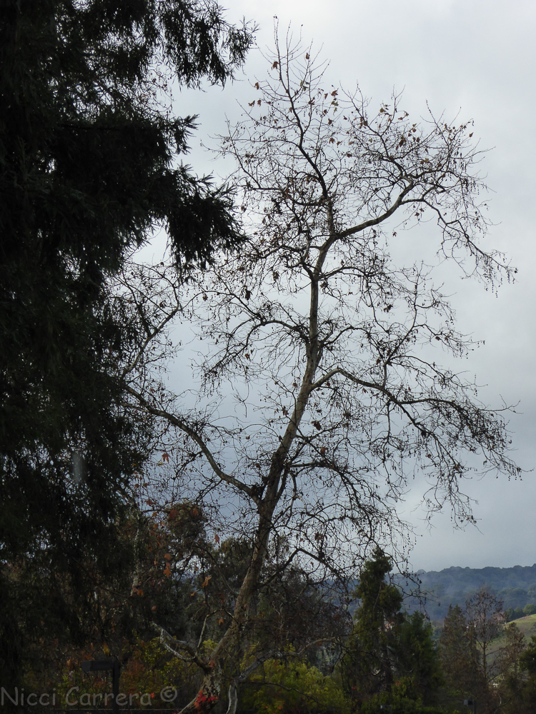 Rain in California-4