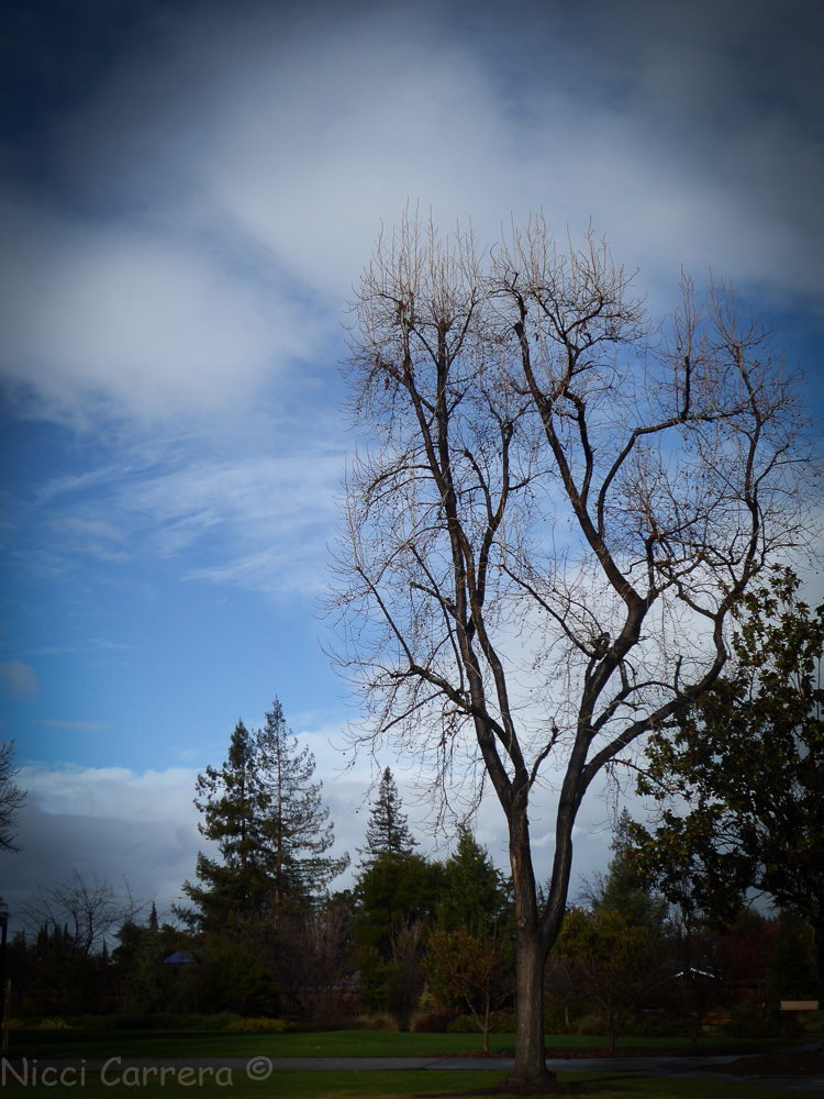 Rain in California-6