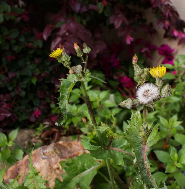 Flowers and weeds-4