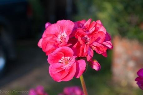 Spring-5