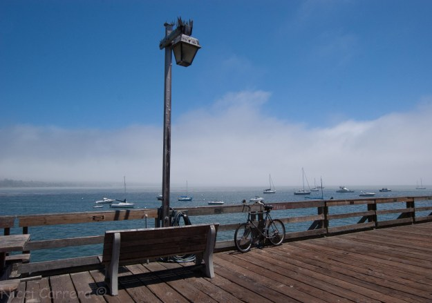 Life on the Capitola pier