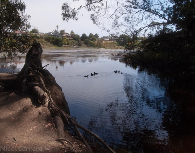 Mystical swamp