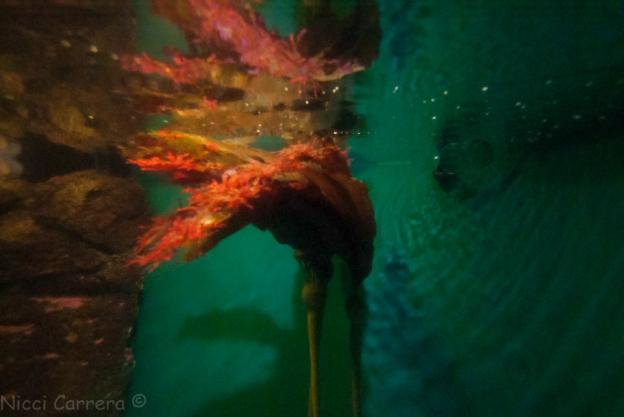 Birch Aquarium-1