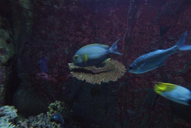 Birch Aquarium-10