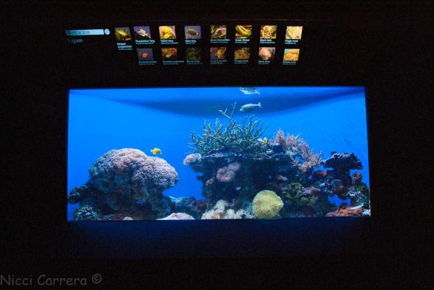 Birch Aquarium-11