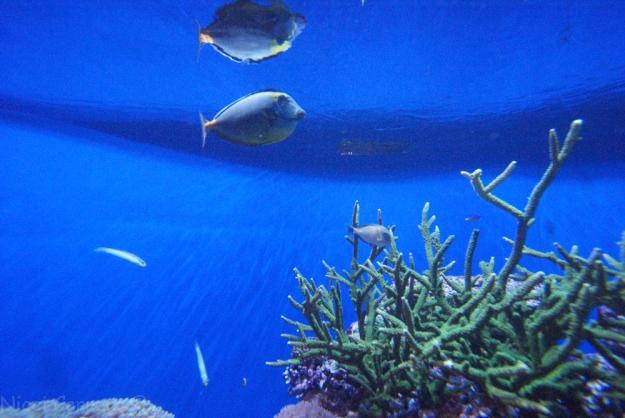 Birch Aquarium-12