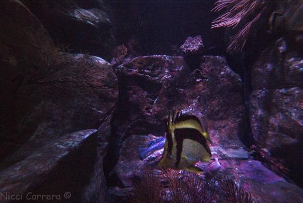 Birch Aquarium-7