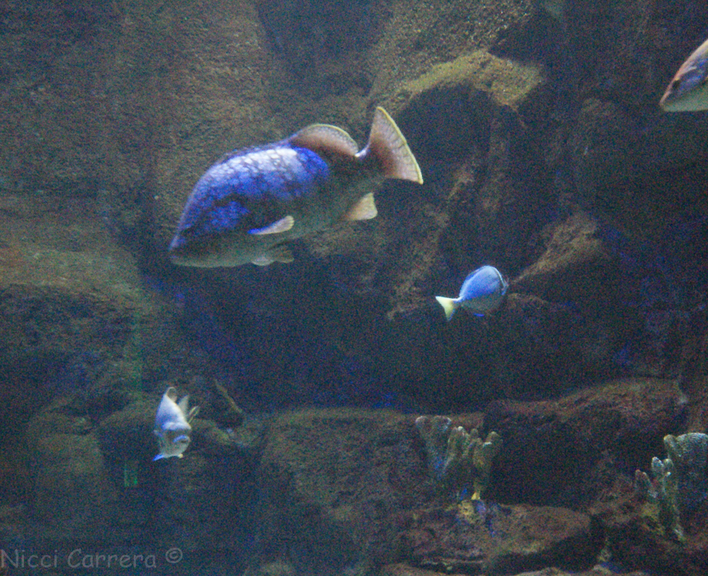 Birch Aquarium-8