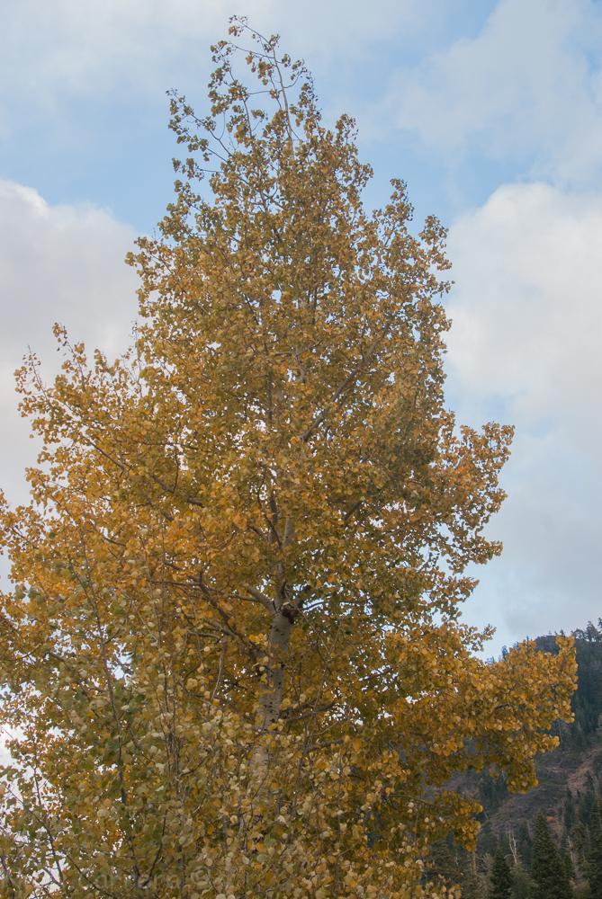 autumn-colors-1