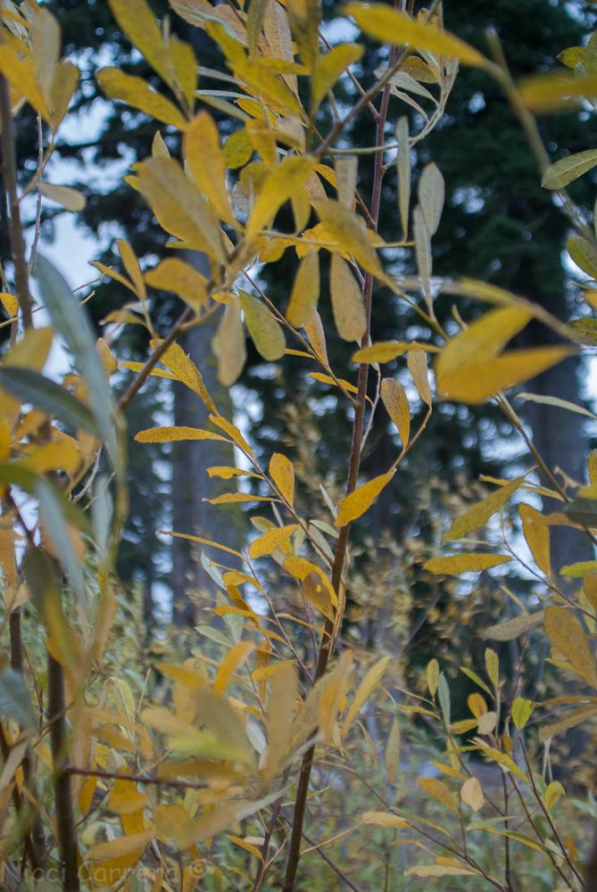 autumn-colors-5