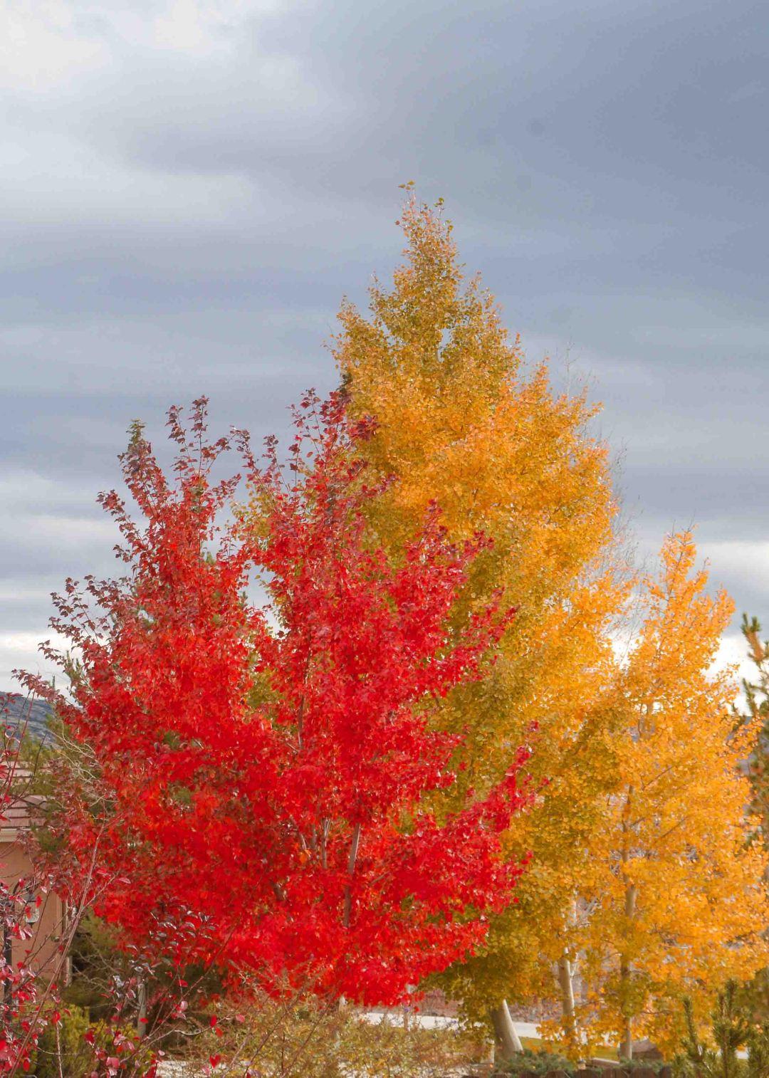 autumn-views-1
