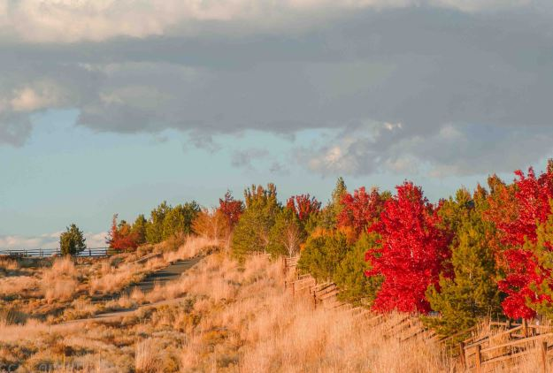 autumn-views-2