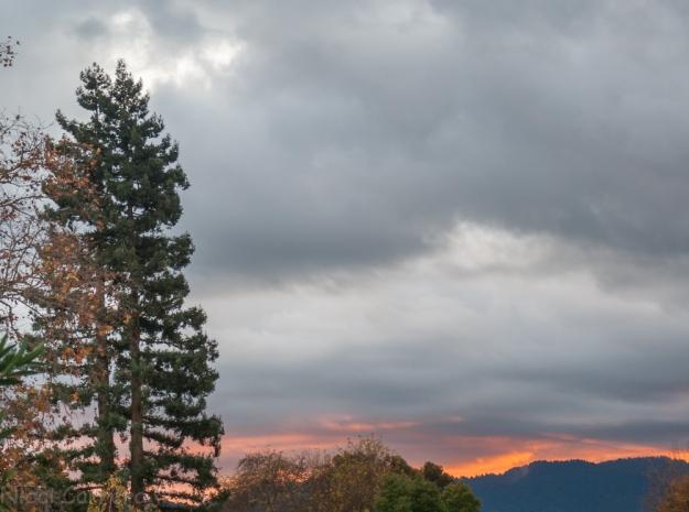 redwood-at-sunset-1
