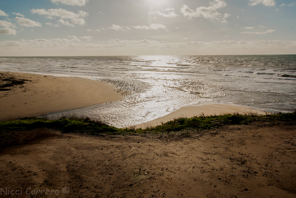 san-gregorio-state-beach-1