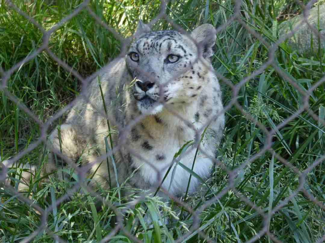 4_29_2017_San_Diego_Zoo_P1140610