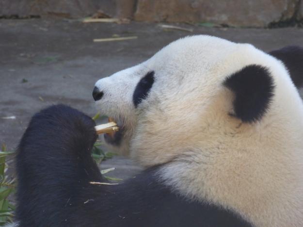 Bai Yun 2b P1140785