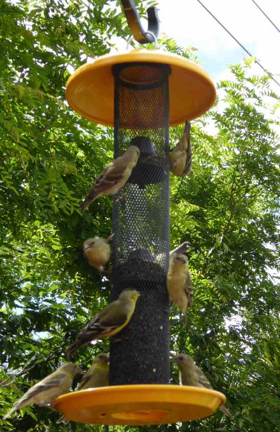 8 Finches