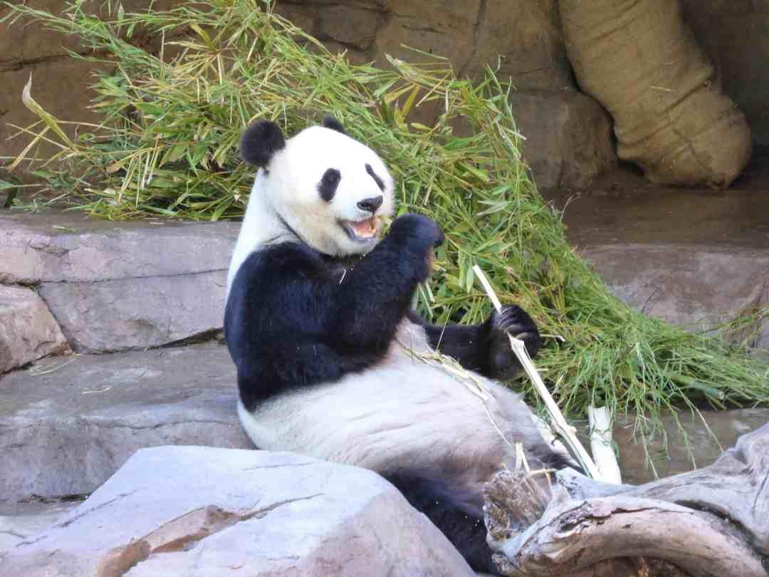 Xiao Liwu 1 P1140751