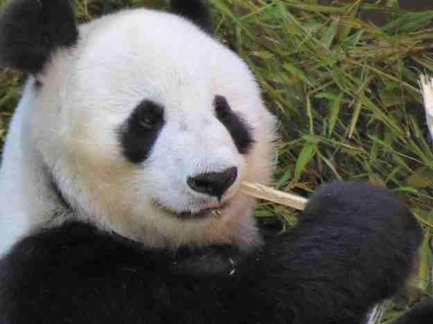 Xiao Liwu 2 P1140771